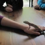 LittleShopOfScience_Leopardgekko